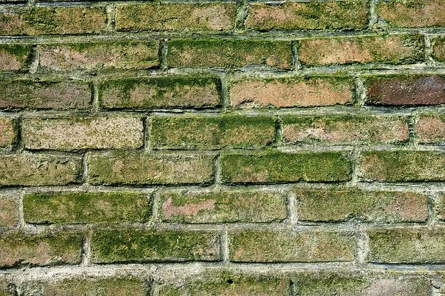 plesnivé zdi